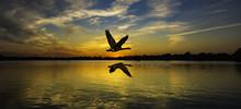 Geese Flying Over Beautiful Su...