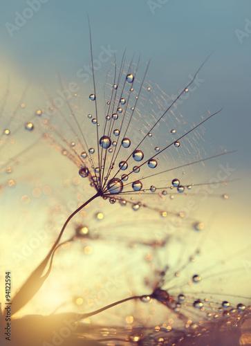 zroszony-dandelion-kwiat-przy-zmierzchu-zakonczeniem-up