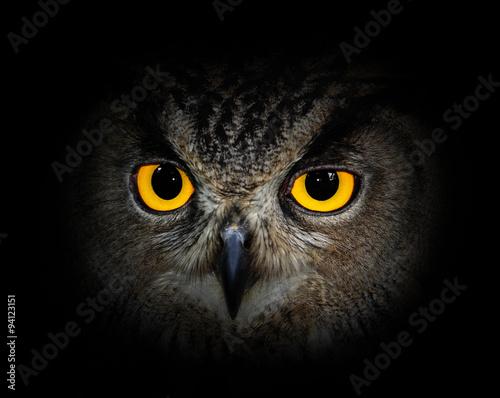 Acrylic Prints Eyes eagle owl on black background