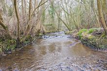 Stream Through Countryside Rural Woodland In Winter