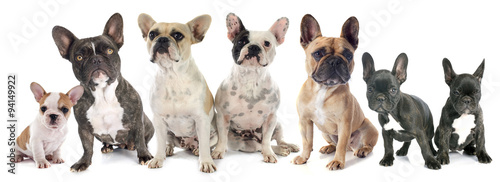 Deurstickers Franse bulldog french bulldogs