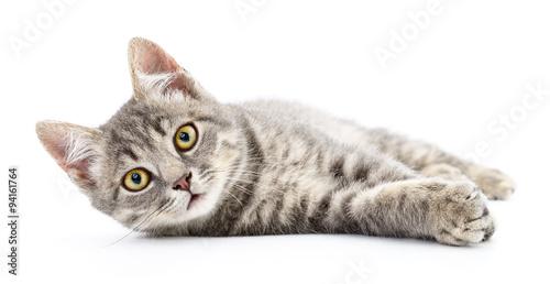 Keuken foto achterwand Kat Kitten on a white background