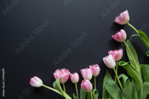 Foto auf AluDibond Tulpen Tulips on a black background
