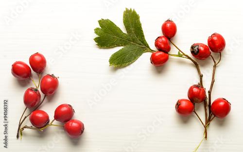 Obraz na plátně Red hawthorn berries