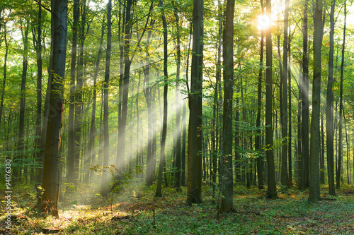 Fototapeten Wald Morning in the forest