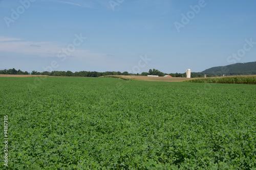 Foto auf Gartenposter Landschappen A field of lush green alfalfa.