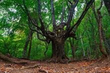 Beautiful Old Tree On Autumn M...