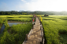 Rural Green Rice Fields And Bamboo Bridge. Place Name Sutongpe Bridge. The Longest Wooden Bridge Located In Mae Hong Son Province The Northern Of Thailand.