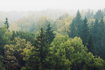 Naklejka смешанный лес в тумане