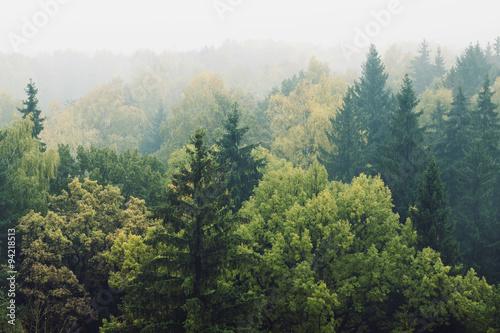Papiers peints Forets смешанный лес в тумане
