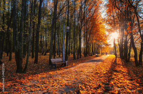 Spoed Foto op Canvas Grijze traf. Beautiful autumn alley in a park with colorful trees and sunlight