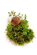 Orange Cap Mushroom And Cranberry In Moss Isolated On White