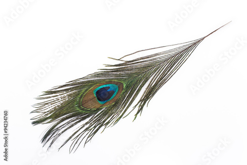 Paon Peacock feather isolated on white
