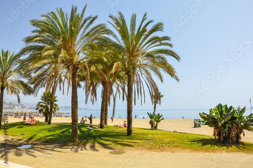 Málaga, palmeras en la Playa de la Malagueta, Andalucía, España