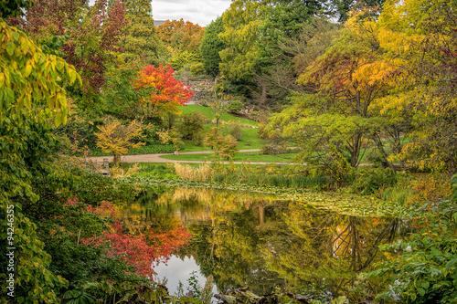 Foto op Canvas Bomen Beautiful autumn scenery