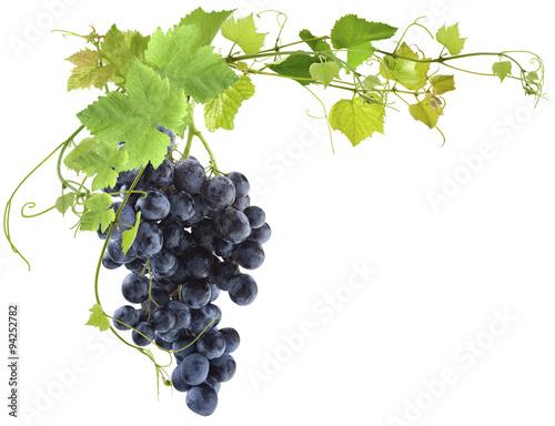 Foto  vigne et grappe de raisin muscat sur fond blanc