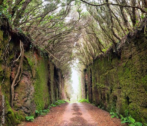 droga-przez-skaly-teneryfa-hiszpania