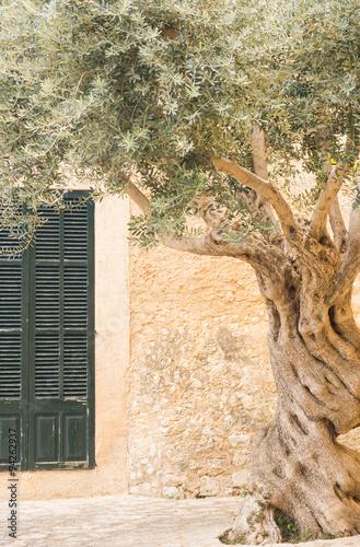 Papiers peints Oliviers Olivenbaum Alt Mediterran