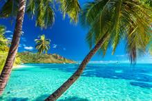 Palm Trees On A Tropical Beach With A Blue Sea On Moorea, Tahiti