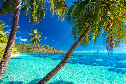 Poster de jardin Tropical plage Palm trees on a tropical beach with a blue sea on Moorea, Tahiti