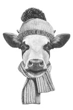 Portrait Of Cow With Scarf And...