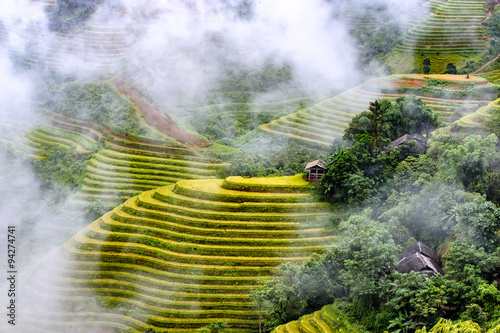 Garden Poster Rice fields Terraced rice fields in Hoang Su Phi district of Ha Giang highland province, Vietnam.