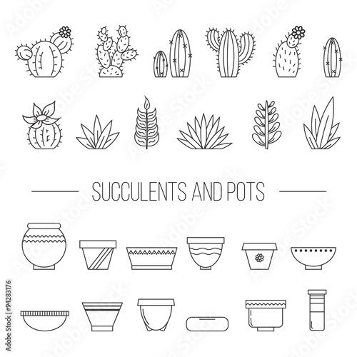 Fototapeta Set of succulent plants, cactuses and pots..Linear botanical vector elements obraz