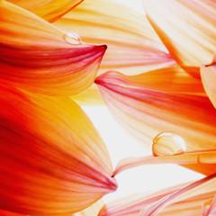 Panel Szklany Florystyczny delicato