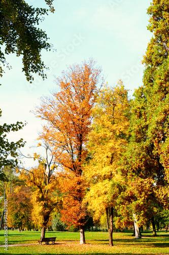 Foto op Aluminium Pistache Autumn, fall.