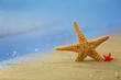 Starfish on seascape background