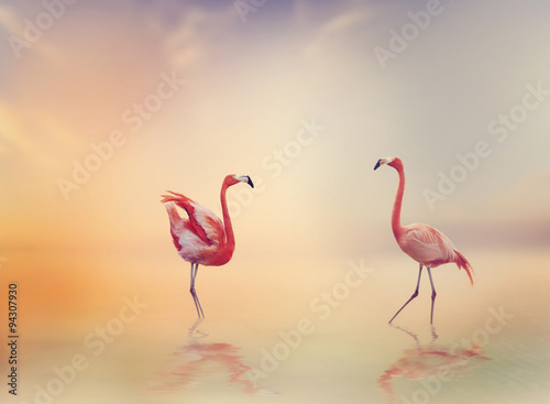 Two Flamingoes at Sunset