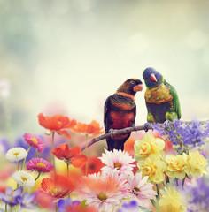 Obraz na PlexiRainbow Parrots(Rainbow Lorikeet)