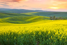 Spring Fresh Landscape Of Colorful Fields, Sunrise Sky And