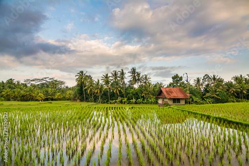 Poster Rijstvelden campo de arroz en bali