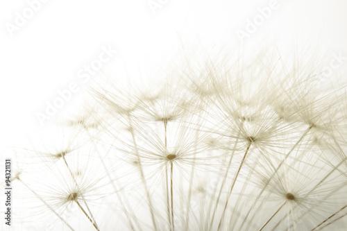 Fotobehang Paardebloem macro of an overblown fluffy dandelion
