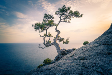 Panel Szklany Drzewa The pine on the rock