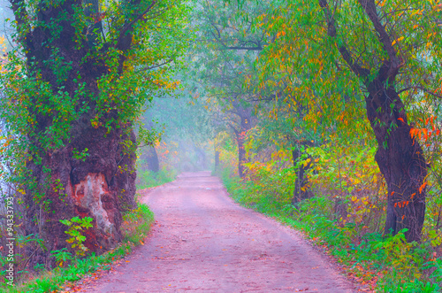 Foto op Aluminium Aubergine Beautiful cross processed autumn landscape showing road through forest