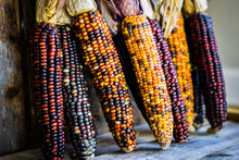 Multicolored Indian Corn On Ru...