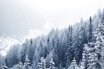 Obraz Snow covered forest