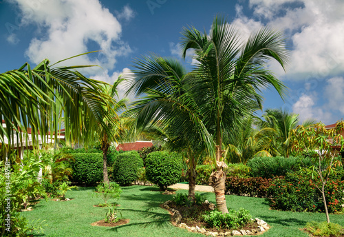 Natural, beautiful gorgeous amazing view of tropical garden on sunny summer day