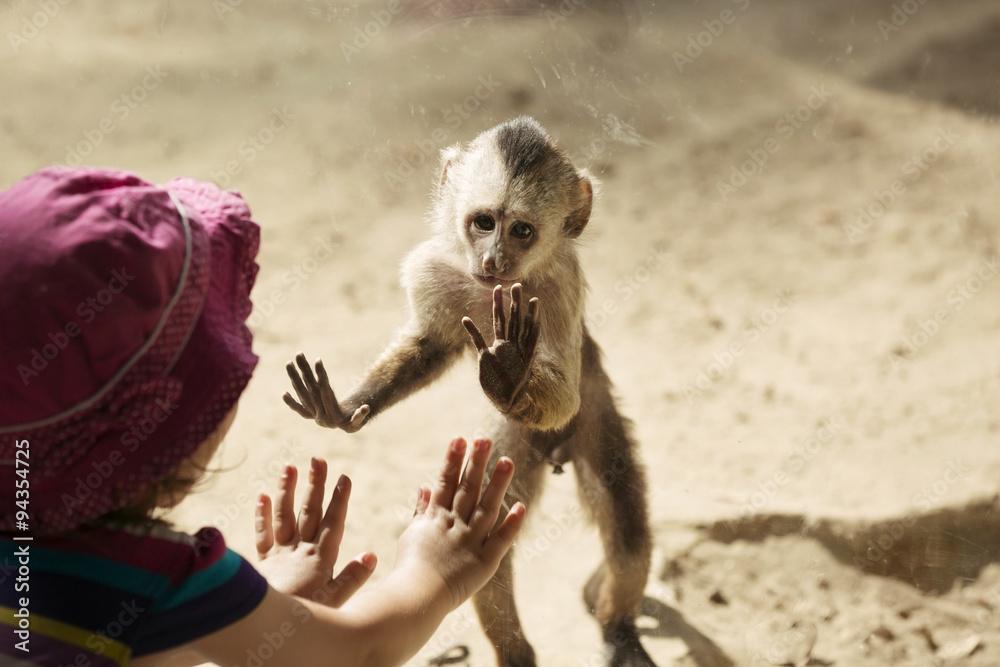Fototapeta Monkey Playing With Toddler Girl