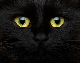 Fototapeta Kot Cute muzzle of a black cat