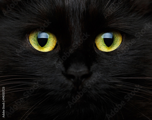 Cute muzzle of a black cat - 94355723