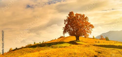 Canvas Prints Honey Autumn tree