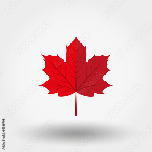 Cuadros en Lienzo Red maple leaf icon.