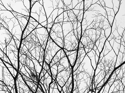 Fotografia  tree branches silhouette