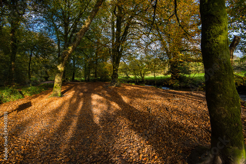 Foto op Canvas Herfst sun rays in autumn woods
