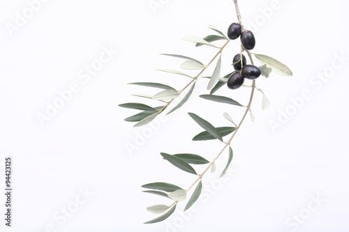 Photo sur Aluminium Oliviers rami di ulivo con i frutti