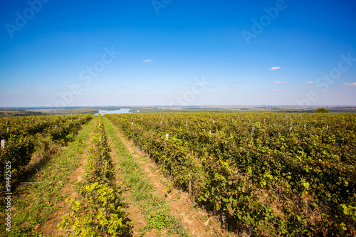 Papiers peints Vignoble Vineyard