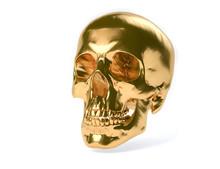 3D Isolated Human Skull.